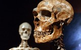 Neanderthals boosted our immunity system